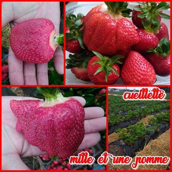 Scrapbooking et carterie de genevi ve page 3 - Comment cueillir des fraises ...